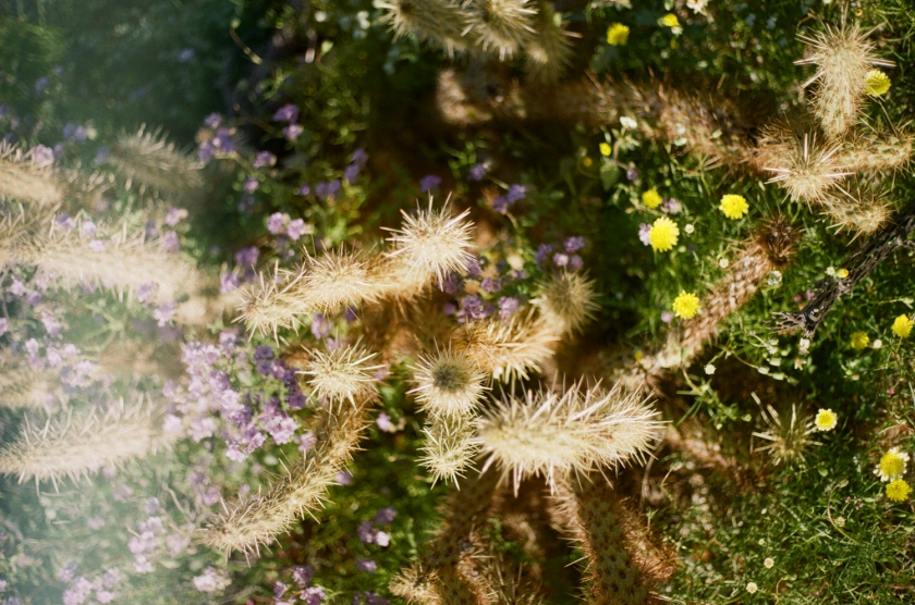 wildflowers3-17-2