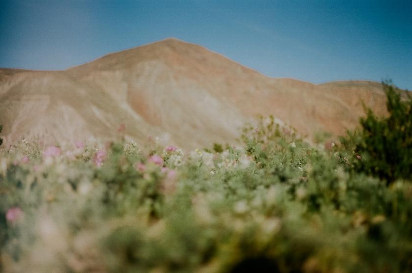 wildflowers3-17-3