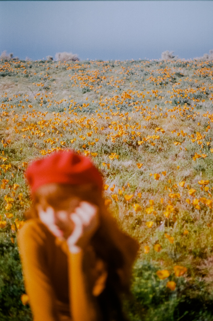 wildflowers3-17-6